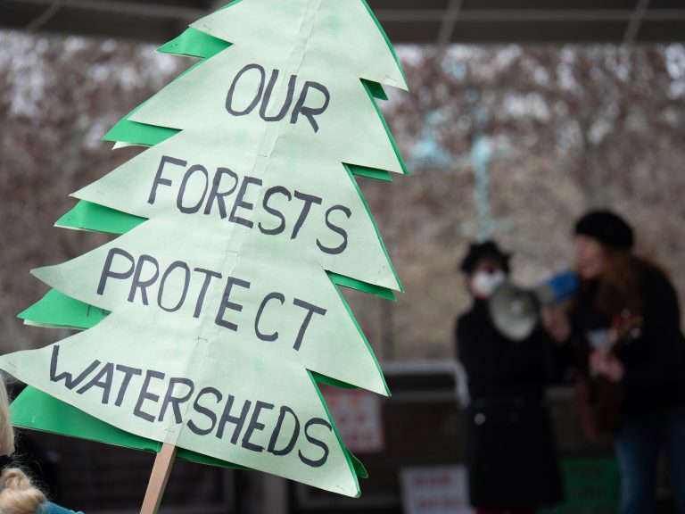 PHOTOS: Demonstrators rally for old growth forest protection around Vancouver Island